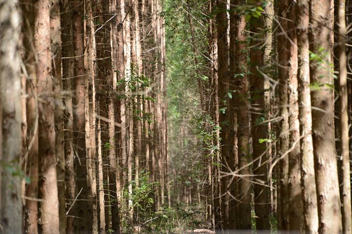 Agroforestry in Savannah Forest